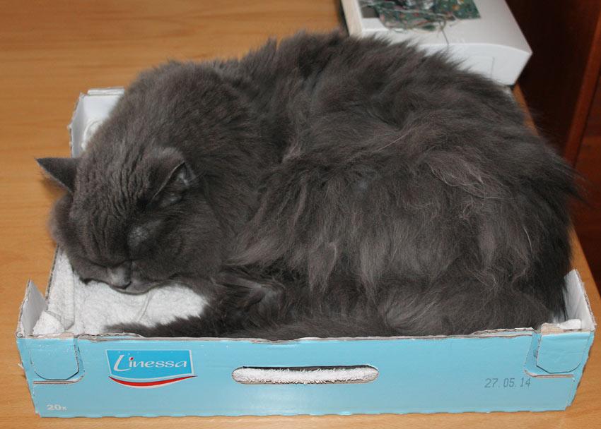 Schlafende Katze im Herbst