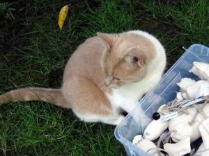 Der diebische Kater mit gespieltem Desinteresse an kätts Katzenspielzeug